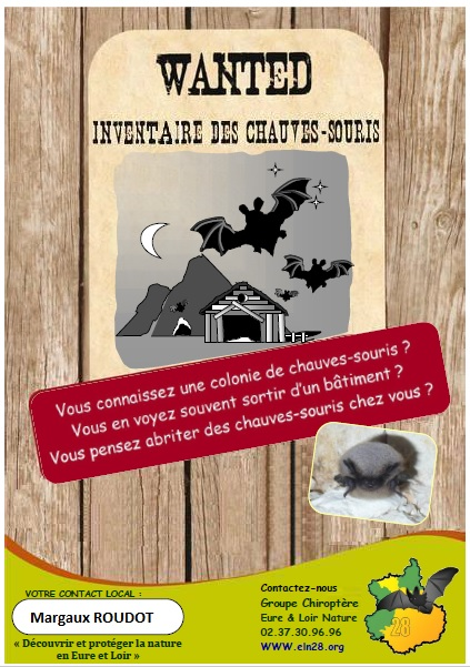 Wanted chauves souris